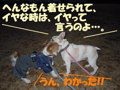 DSCN2674_convert_20111128175827.jpg