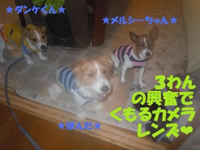 DSCN2677_convert_20111212151109.jpg
