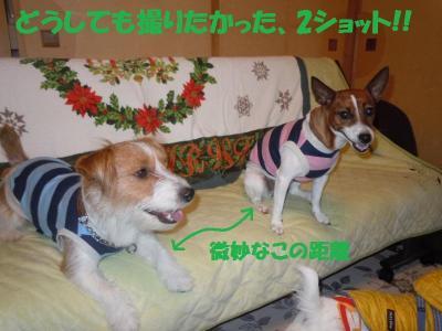 DSCN2682_convert_20111212151326.jpg
