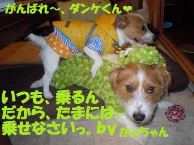 DSCN2696_convert_20111212151538.jpg