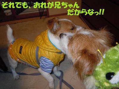 DSCN2700_convert_20111212151659.jpg