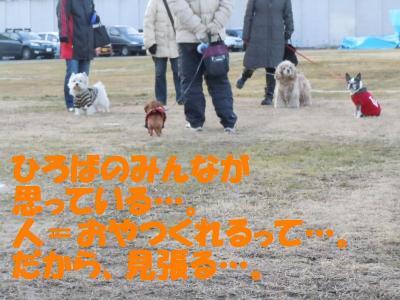 DSCN2830_convert_20120204181345.jpg