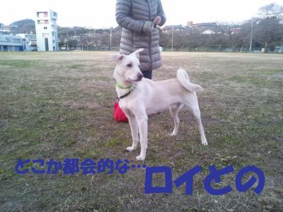 DSC_0732_convert_20111230191601.jpg