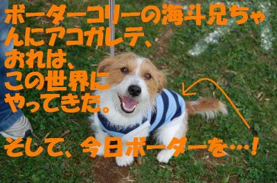 DSC_7366_convert_20111110160620.jpg