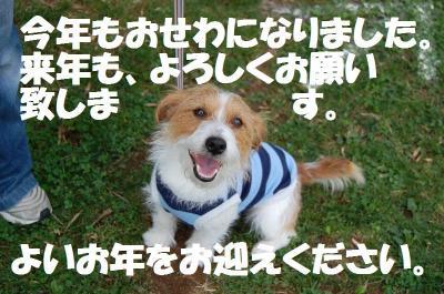 DSC_7366_convert_20111230185223.jpg