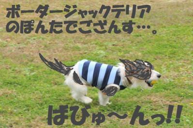 ESC_0780_convert_20111110161348.jpg