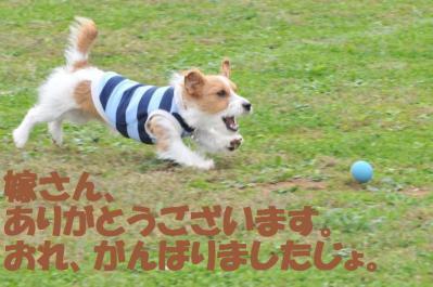 ESC_0828_convert_20111110162205.jpg