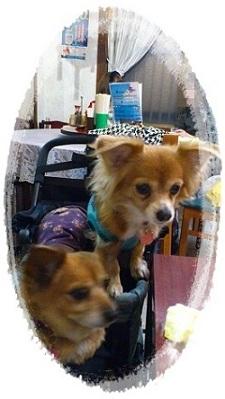 yurie 写真 413
