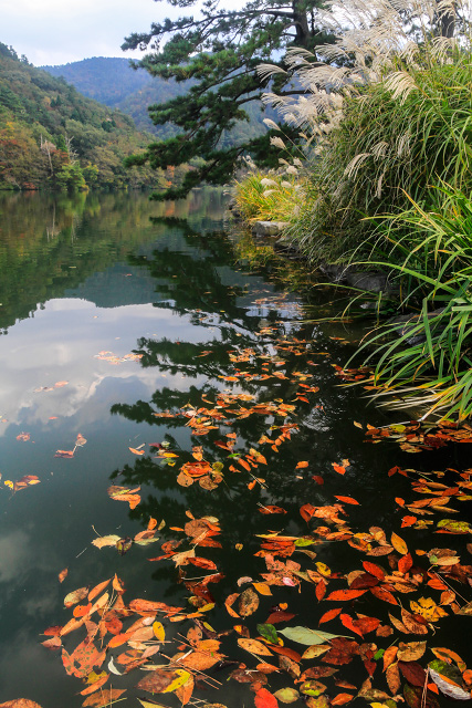 鳥取県 西伯郡 大山町 レークホテル 紅葉 大野池