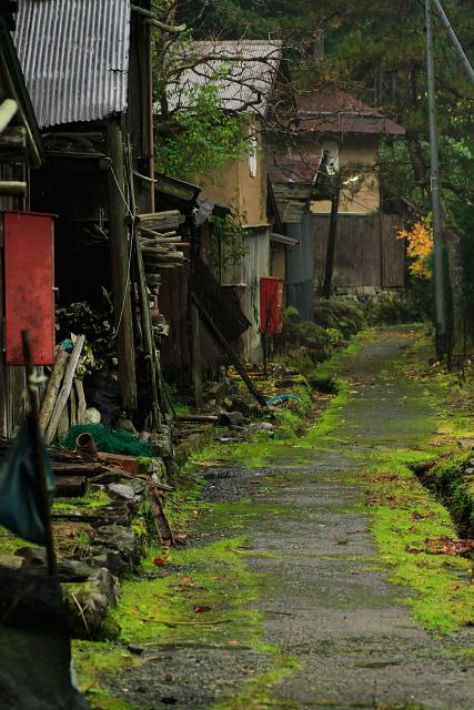 鳥取県 智頭町 板井原集落 秋 紅葉