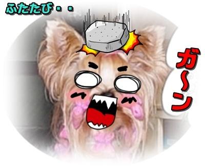 DSCN0292_20110919225848.jpg