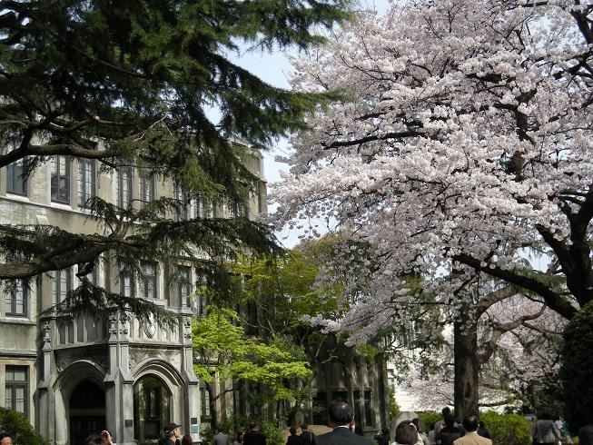 青山学院 桜