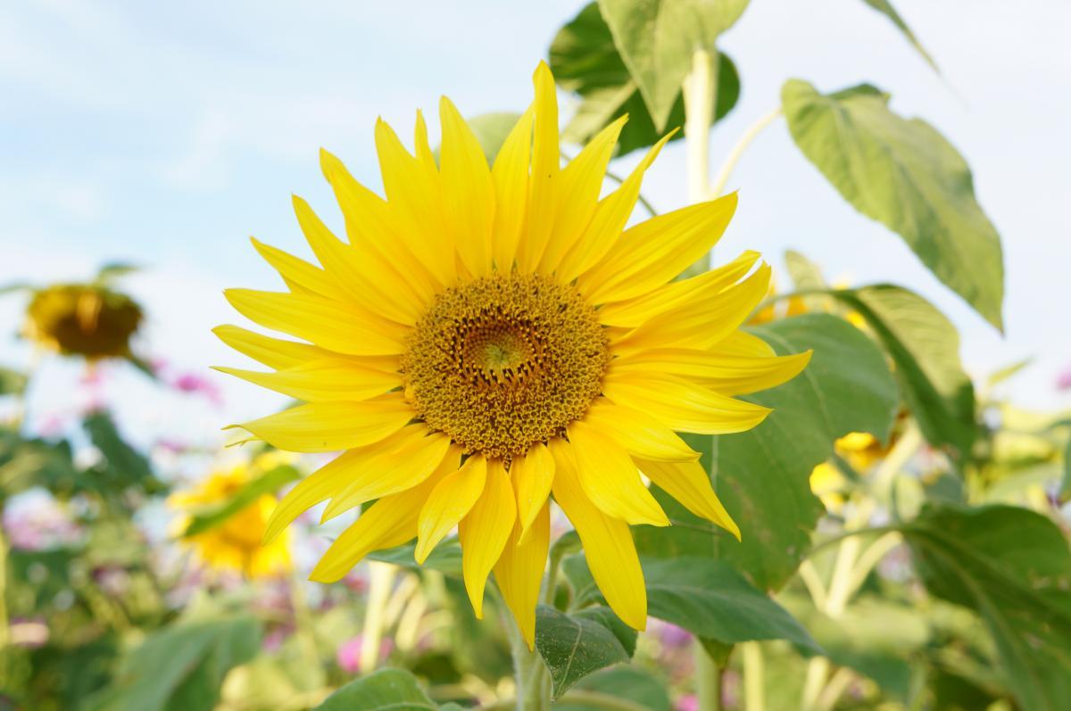 flower-DSC00896_convert.jpg