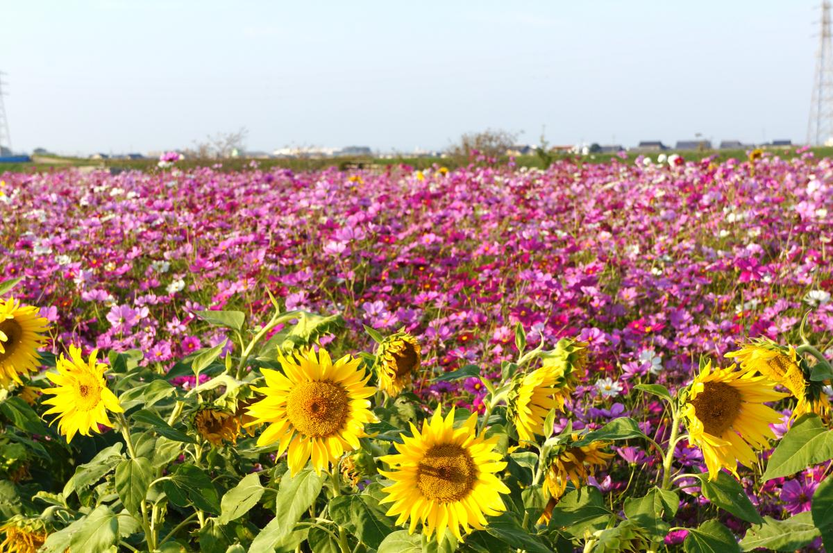 flower-DSC00899_convert.jpg