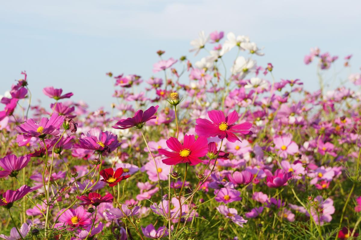 flower-DSC00904_convert.jpg