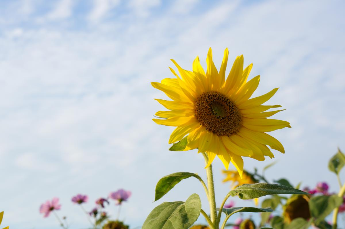 flower-DSC00909_convert.jpg