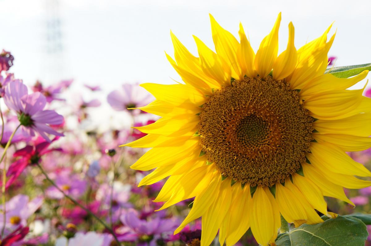flower-DSC00913_convert.jpg