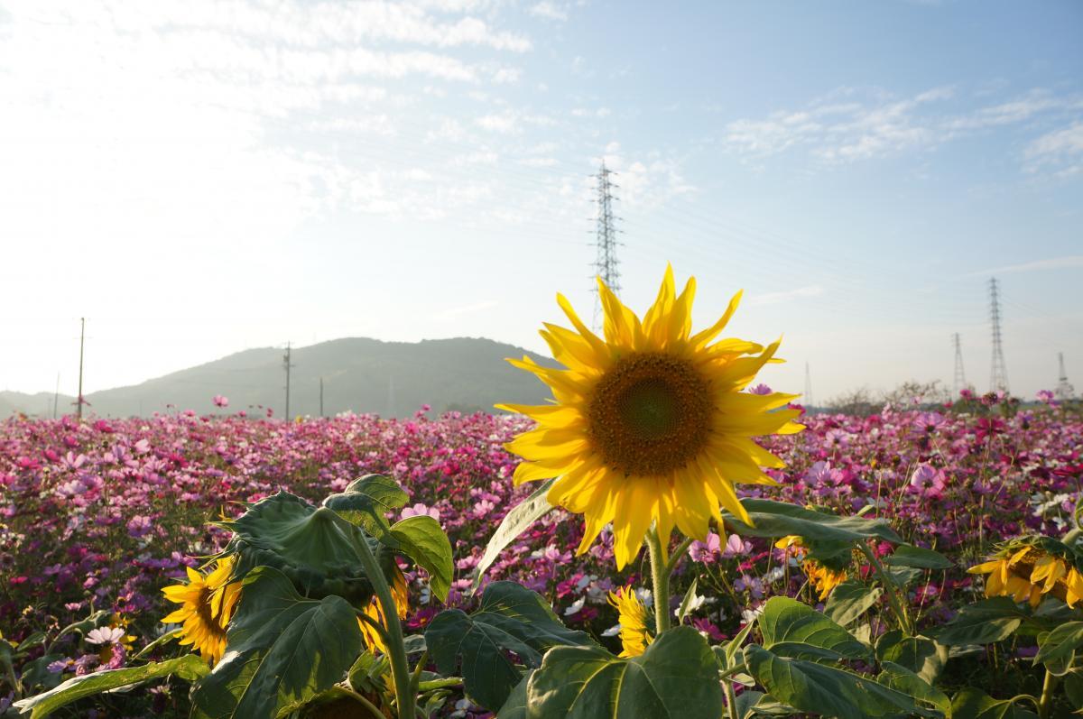 flower-DSC00921_convert.jpg