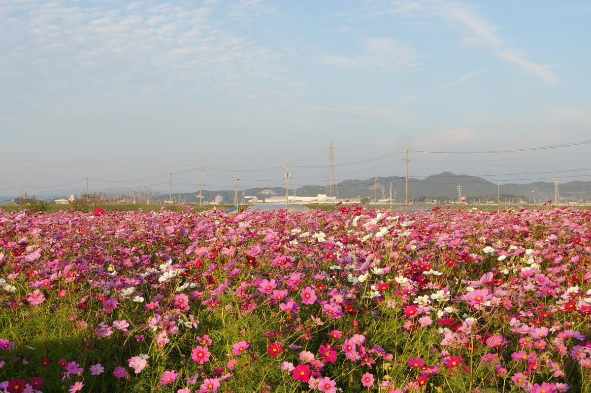 flower-DSC00922_convert.jpg