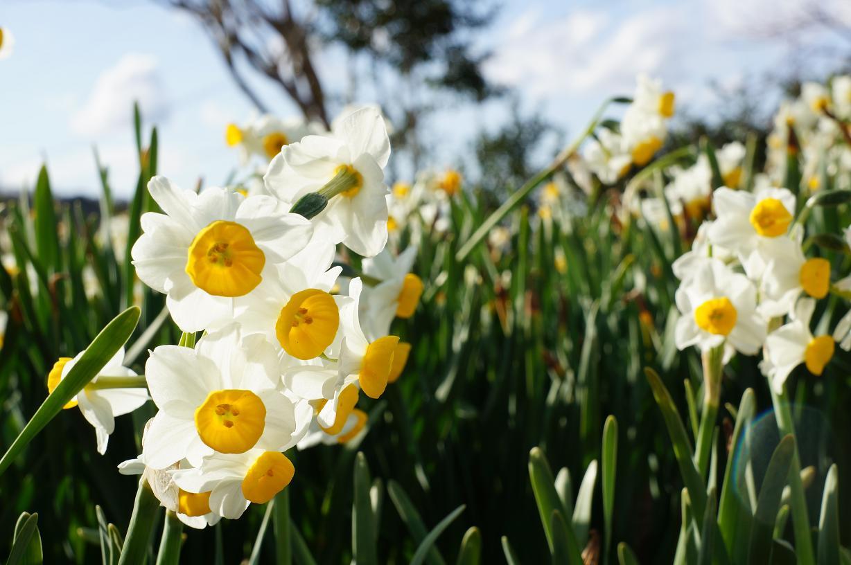flower-DSC03084s.jpg
