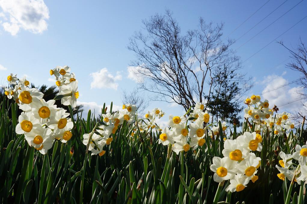 flower-DSC03099s.jpg