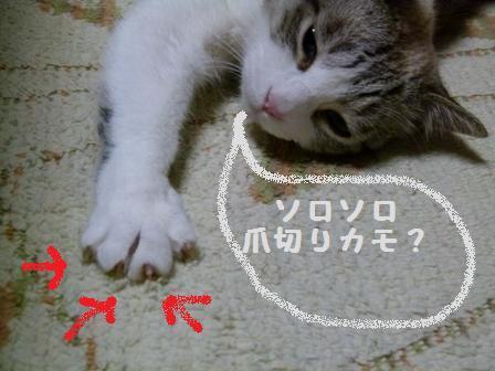 12.9夕焼け他 002