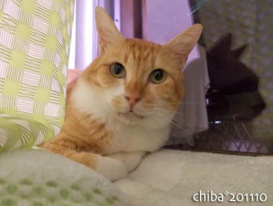 chiba11-10-131.jpg