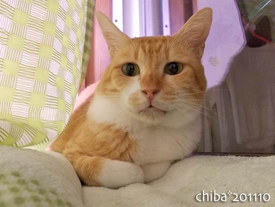 chiba11-10-133.jpg