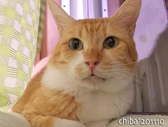 chiba11-10-135.jpg