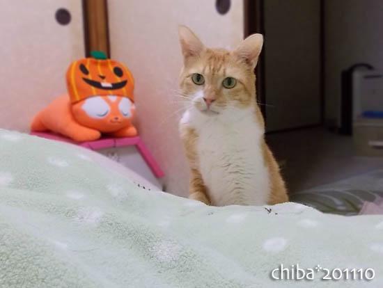 chiba11-10-170.jpg