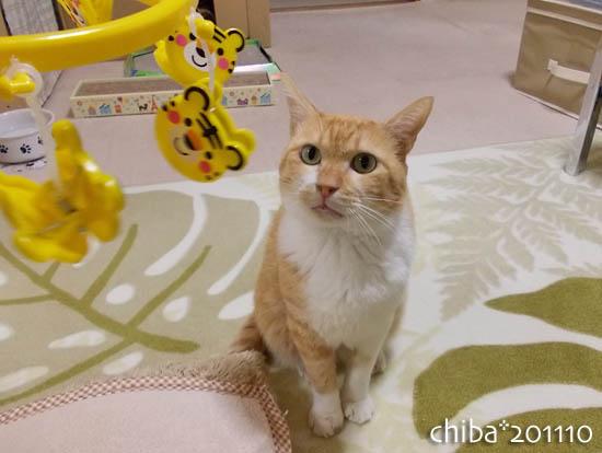 chiba11-10-175.jpg