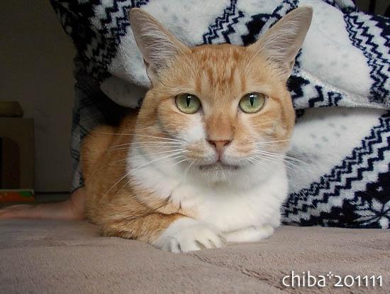 chiba11-11-139.jpg