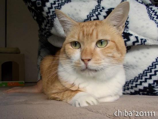 chiba11-11-140.jpg