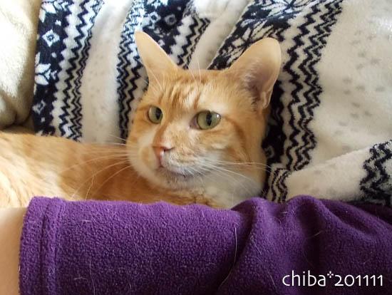 chiba11-11-154.jpg