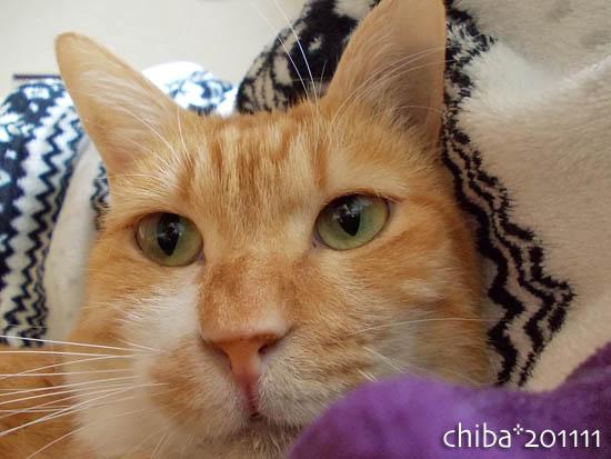 chiba11-11-155.jpg