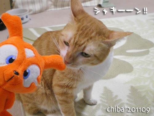 chiba11-11-30.jpg