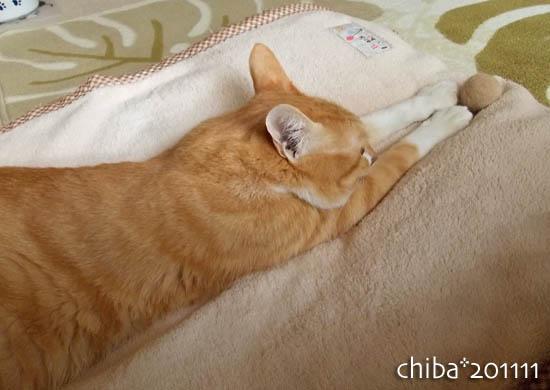 chiba11-11-39.jpg
