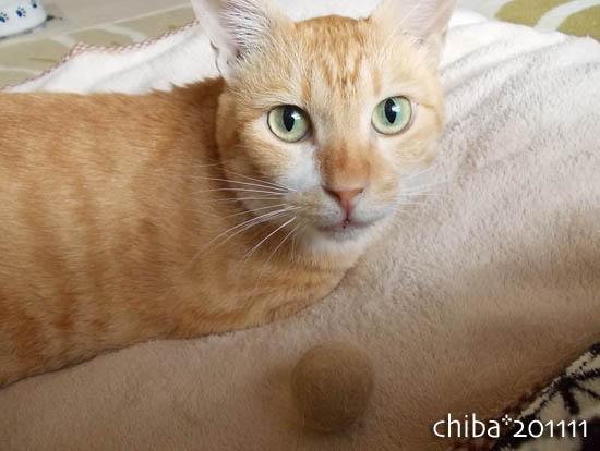chiba11-11-40.jpg