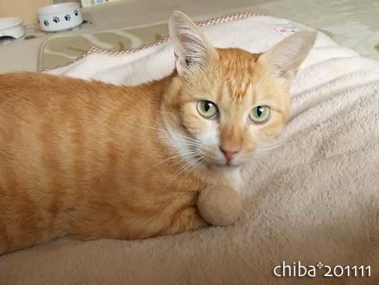chiba11-11-42.jpg