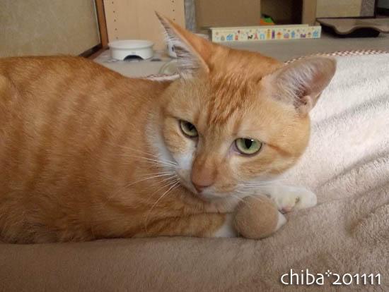 chiba11-11-46.jpg