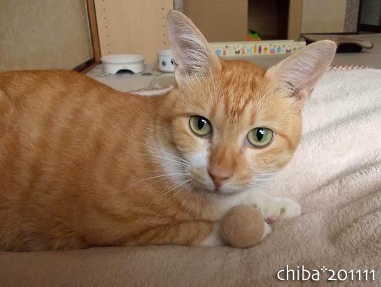 chiba11-11-47.jpg