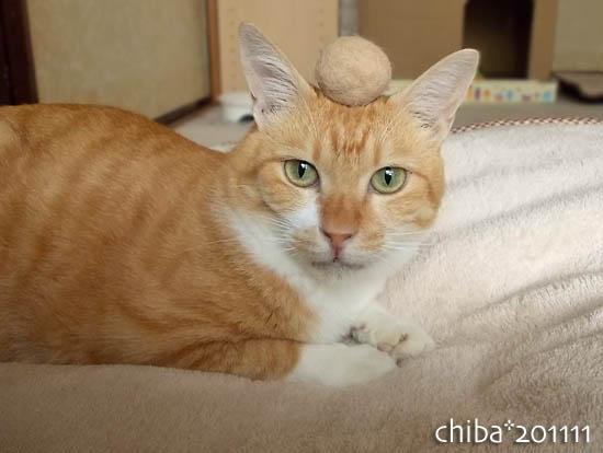 chiba11-11-48.jpg