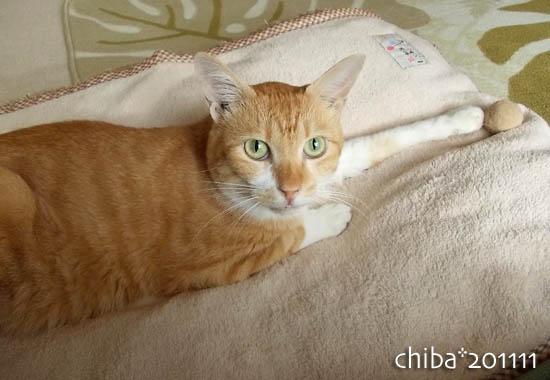 chiba11-11-50.jpg