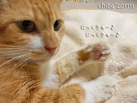 chiba11-11-65.jpg