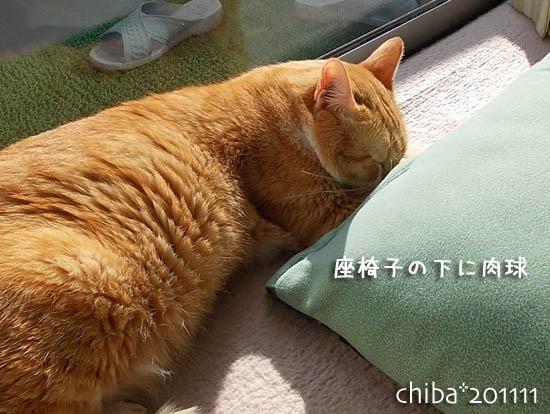 chiba11-11-78.jpg