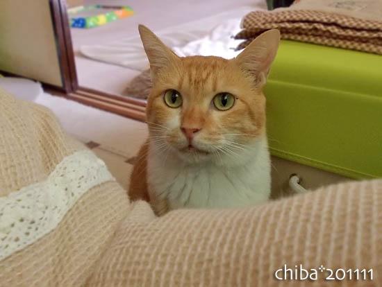 chiba11-11-80.jpg