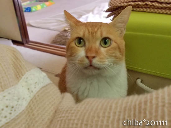 chiba11-11-81.jpg