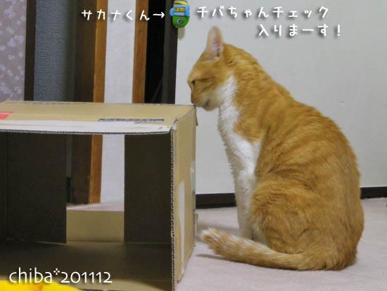 chiba11-12-11.jpg