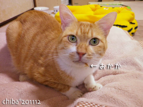 chiba11-12-117.jpg