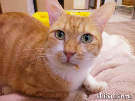 chiba11-12-122.jpg